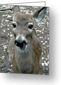 Rudolph Greeting Cards - Doe eyed deer talk Greeting Card by LeeAnn McLaneGoetz McLaneGoetzStudioLLCcom