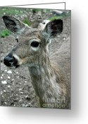 Rudolph Greeting Cards - Doe Eyes Greeting Card by LeeAnn McLaneGoetz McLaneGoetzStudioLLCcom
