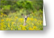 Pouring Greeting Cards - Doe in the Rain Greeting Card by Brandon Broderick