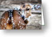 Everything Else Greeting Cards - Doe Greeting Card by Kimberly Gonzales