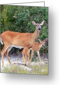 White Tail Deer Print Digital Art Greeting Cards - Doe with Fawn I Greeting Card by Sheri McLeroy