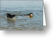 Retriever Prints Photo Greeting Cards - Dog 30 Greeting Card by Joyce StJames