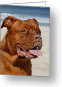 Playful Pups Greeting Cards - Dog 55 Greeting Card by Joyce StJames