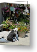 Playful Pups Greeting Cards - Dog 56 Greeting Card by Joyce StJames