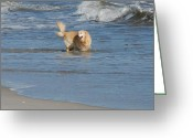 Playful Pups Greeting Cards - Dog 57 Greeting Card by Joyce StJames