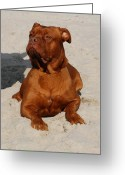 Playful Pups Greeting Cards - Dog 59 Greeting Card by Joyce StJames