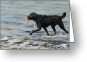 Playful Pups Greeting Cards - Dog 71 Greeting Card by Joyce StJames