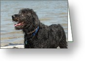 Playful Pups Greeting Cards - Dog 74 Greeting Card by Joyce StJames