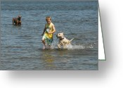 Retriever Prints Photo Greeting Cards - Dog 79 Greeting Card by Joyce StJames