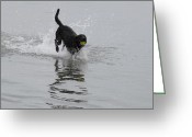 Retriever Prints Photo Greeting Cards - Dog 82 Greeting Card by Joyce StJames
