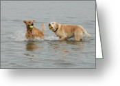 Playful Pups Greeting Cards - Dog 83 Greeting Card by Joyce StJames