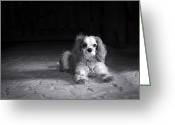 Watch Dog Greeting Cards - Dog black and white Greeting Card by Jane Rix