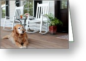 Rocking Chairs Greeting Cards - Dog days of summer Greeting Card by Toni Hopper