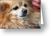 Spoiled Greeting Cards - Dog First Greeting Card by Charline Xia