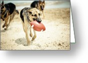 Playing On Beach Greeting Cards - Dog Holding Ball In Mouth Greeting Card by R. Brandon Harris