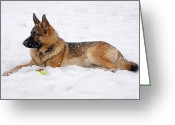 Purebreed Greeting Cards - Dog in Snow Greeting Card by Sandy Keeton