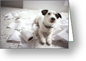 Toilet Paper Greeting Cards - Dog Lying On Bathroom Floor Amongst Shredded Lavatory Paper Greeting Card by Chris Amaral