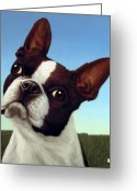 Boston Greeting Cards - Dog-Nature 4 Greeting Card by James W Johnson