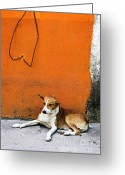 Orange Greeting Cards - Dog near colorful wall in Mexican village Greeting Card by Elena Elisseeva