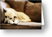 Yellow Dog Greeting Cards - Dog On The Couch Greeting Card by HD Connelly