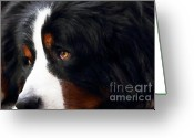 Puppies Greeting Cards - Dog . Photo Artwork Greeting Card by Wingsdomain Art and Photography