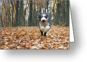 Animal Themes Greeting Cards - Dog Running In Forest Greeting Card by Regarder tout autour de soi