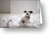 Toilet Paper Greeting Cards - Dog Sitting On Bathroom Floor Amongst Shredded Lavatory Paper Greeting Card by Chris Amaral