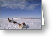 Expedition Greeting Cards - Dog Sled Crosses Frozen Lake Greeting Card by Gordon Wiltsie