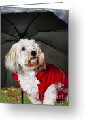 Furry Greeting Cards - Dog under umbrella Greeting Card by Elena Elisseeva