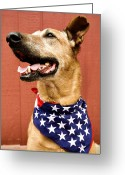 Yellow Dog Greeting Cards - Dog With American Flag Greeting Card by Dawn Kish