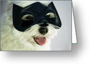 Panting Dog Greeting Cards - Dog With Cat Mask Greeting Card by Carolyn Hebbard