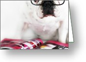 Animal Portrait Greeting Cards - Dog With Glasses Greeting Card by Retales Botijero