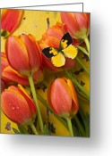 Flying Greeting Cards - Dogface butterfly and tulips Greeting Card by Garry Gay