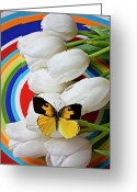 Metamorphosis Greeting Cards - Dogface butterfly on white tulips Greeting Card by Garry Gay