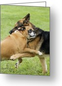 Dog Prints Photo Greeting Cards - Doggie Love Greeting Card by David Lester
