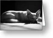 Sleeping Dog Greeting Cards - Doggy Dreamin Greeting Card by Mandy Shupp