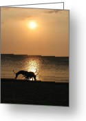 Taganga Greeting Cards - Dogs at sunset Greeting Card by Gal Moran