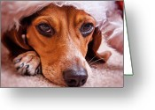 Beagle Greeting Cards - Dogs In Santa Hat Greeting Card by Rich Johnson of Spectacle Photo