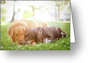 Embracing Greeting Cards - Dogs Snuggling Outside Being Cute Greeting Card by Jessica Trinh