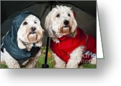 Clothing Greeting Cards - Dogs under umbrella Greeting Card by Elena Elisseeva