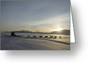 Defence Greeting Cards - Dogsledge, Northern Greenland Greeting Card by Louise Murray