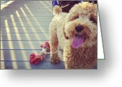 Petstagram Greeting Cards - #dogstagram #petstagram #ifuckinglove Greeting Card by Melissa Torres