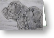 Pencil Greeting Cards - Dogue de Bordeaux Greeting Card by Keran Sunaski Gilmore