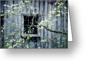 Old Barns Photo Greeting Cards - Dogwood Blossoms  Greeting Card by Thomas Schoeller
