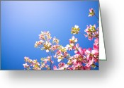 Pink Flower Branch Greeting Cards - Dogwood Flowers Greeting Card by Marser
