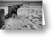 On The Beach Greeting Cards - Doing what dogs always do Greeting Card by John Farnan