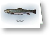 Game Drawings Greeting Cards - Dolly Varden Trout Greeting Card by Ralph Martens