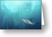 Large Group Of Animals Greeting Cards - Dolphin Greeting Card by Alexander Safonov