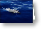 Greaves Greeting Cards - Dolphin Breaking Free Greeting Card by John  Greaves