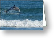 Bottle-nosed Dolphin Greeting Cards - Dolphin in surf Greeting Card by Bradford Martin